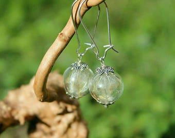 Earrings, Globe/ball glass, dried flowers, beige, white, 13mm.