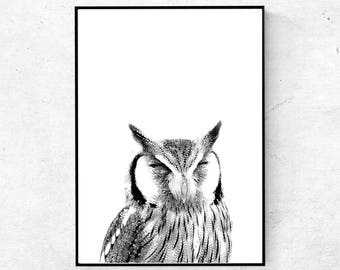 Owl print, owl wall art, animal print, woodlands nursery wall art, owl photography, woodlands nursery wall art