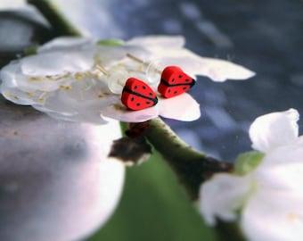 Jewel beetle insect Stud Earrings