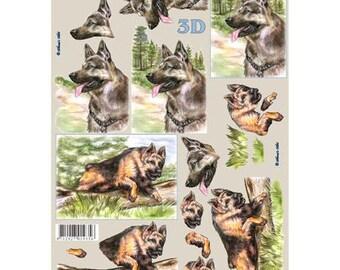 LS8215202 German shepherds