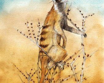 The Meerkat / The meerkat, watercolor on paper