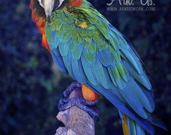 Post Parrot Macaw blue red yellow and green on a branch 30x45cm