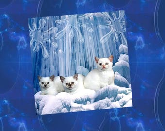 "Cat greeting card: ""not even cold!"""