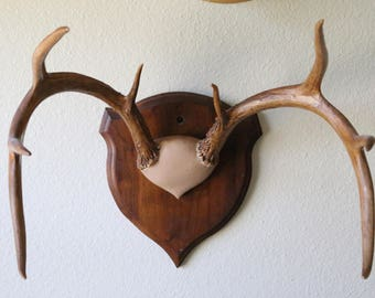 8 pt Whitetail Deer Antler Plaque from 1957