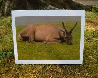 Elk - Yellowstone Road Trip Collection - Handmade Blank Photography Greeting Card
