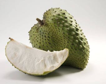 Guanabana Soursop Plant - 3 gallon - Established Live Plant- Naturally Grown - Quality Assurance - Permaculture Plant