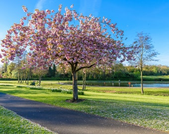 Spring in Bournville, Birmingham, UK 9x6 Mounted Photo Print