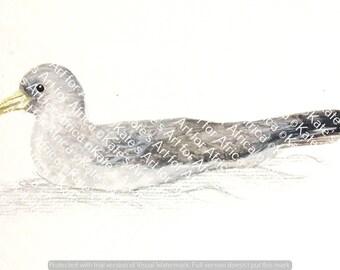Einzigartige vogel duschvorhang steampunk stoffvorhang - Schwarzer duschvorhang ...