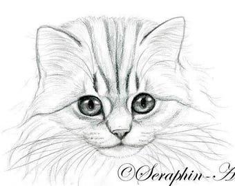 Chinchilla Persian Cat Original Graphite Portrait