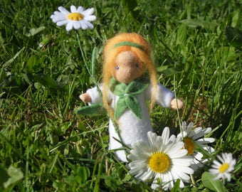 PYRETHRUM Flower child
