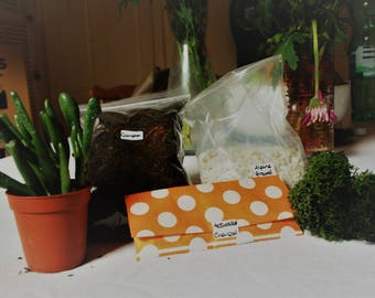Complete Terrarium Starter Kit - small miniature garden with succulent plant and moss