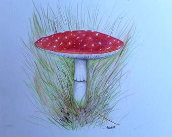 Toadstool illustration Fly Agaric