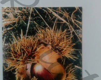 Photo magnet packaged chestnut fall