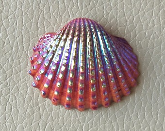 Beautiful Natural Color Coated Seashell, Titanium Shell Cabochon Size 42x30x7 MM Approx, Tropical Seashell, Bulk Seashells, Seashell Craft.