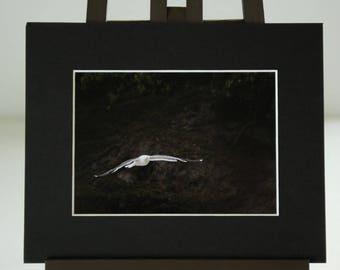 New Zealand Seagull Photographic Print