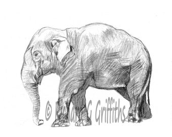 A4 Elephant side view from Original Sketch. Unmounted