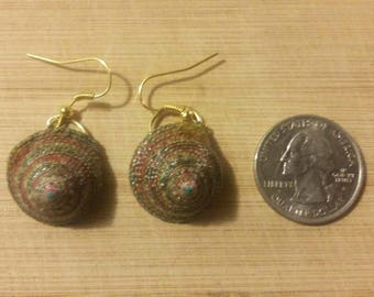 Real seashell hand crafted earrings