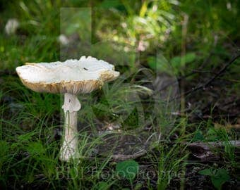 Mushroom in the Forest | Landscape Photo Art | Nature Gift | Fine Art Photography | Personalization | BDPhotoShoppe | Home Office Decor