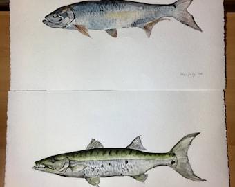 SOLD Barracuda and Tarpon fish