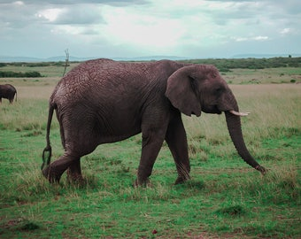 Poppi the Elephant