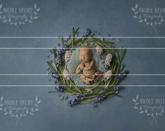 Digital background baby photographer