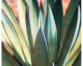 Agave Print - Nature Photograph - Succulent Photograph - Flower Photo - Spine 6 - Fine Art Photograph - Alicia Bock - Green Art - Floral Art
