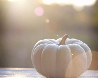 50% OFF SALE White Pumpkin - Cream Pumpkin - Autumn - Fall Home Decor - Rustic Fall Decoration Pumpkin Art 8x8 Fine Art Photography Print -