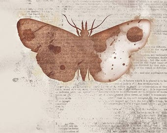 50% Off Summer Sale - Moth Art - Leopold - Butterflies and Moths Series - 8x10 - rustic Collage Art
