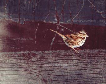 Bird on a Fence, Photography, Art Print