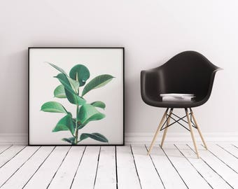 Plant Print, Minimal Botanical Art, Gift for Gardener, Kitchen Wall Art - Rubber Fig