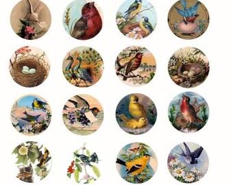 Vintage birds eggs nests 1.5 inch circles clip art IMAGES collage sheet digital download graphics art printable