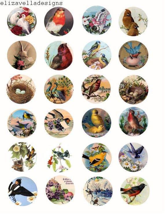 Vintage birds eggs nests flowers 1.5 inch circles clip art IMAGES collage sheet digital download graphics art printable