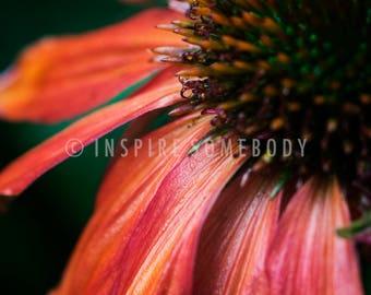 BE YOU 8x12 Orange Cone Flower Fine Art Print