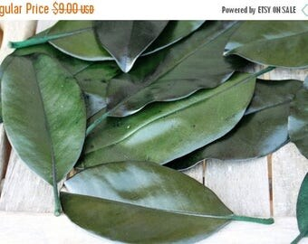 Save 15% 25 Magnolia leaves preserved green - Gift wrapping-Party Favors-Wedding invitations