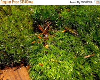 Save25% Terrarium Moss-Mood Moss-Frog Moss-Live Moss for Terrariums and Vivariums-1 Gallon Bag
