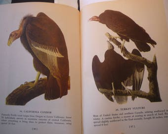 California Condor and Turkey Vulture 2 pages - Audubon Color Plate  for birders - nature lovers 8.25 by 5 inch ready to frame