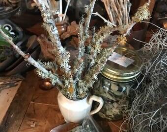 Lichen twigs, moss twigs, tree twigs, lichen decorations, potpourri, small branches, art supplies, floral decor