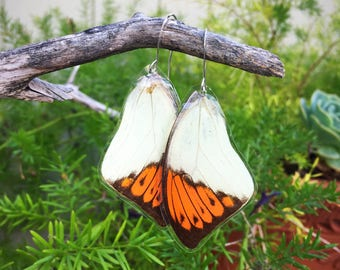 Orange Tip Butterfly Wing Earrings, Dead Leaf, Cruely Free, Big Butterfly, Earthy Organic Jewelry, Natural, Bohemian Jewelry, Recycled BW101