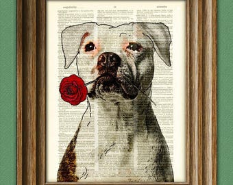 """Pitbull Art Print """"Rosie the Lover"""" White Pit Bull with flower illustration beautifully upcycled dictionary page book art print"""