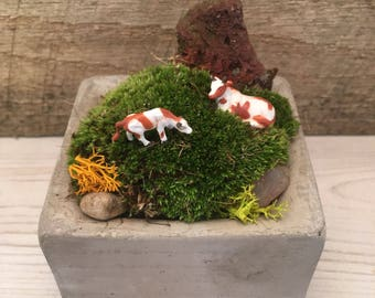 Fairy Moss Concrete Planter, with Dairy Cows, gift for dorm room, office space, get well gift,  cute, unique fun gift for hard to buy for.