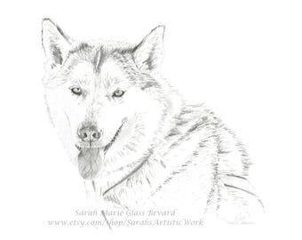 Print of 'Tubs' the siberian husky from original graphite drawing by Sarah Marie Glass