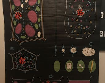 Dr. Auzoux cell classroom pull down chart chalk board anatomy RARE 1940s French