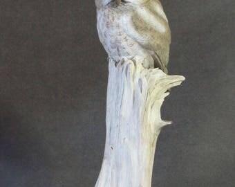 Miniature Gray Phased Screech Owl