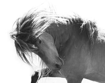 Sable Island Stallion's Pride - Fine Art Horse Photograph - Horse - Sable Island - Wild Horse - Black and White -Fine Art Print