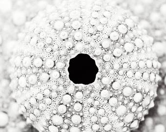 Sea Urchin Shell Pattern Black and White Photograph Print