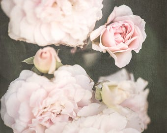Second Large Square Print, Soft Pink Wall Art, Roses, Summer Photograph, Floral Print, Office Wall Art, Home Wall Art, Nursery Wall Art