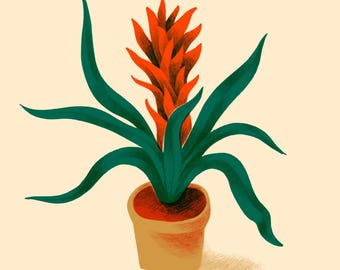 Plant Illustration Bromeliad Botanical Print