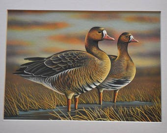 Goose Original Painting by Doug Walpus, White Fronted Geese, Acrylic, Birds, Waterfowl, Goose, Wall Decor, Gifts, Office Decor