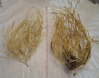 A variety of Sea Fans, Sea Whips, Dried Seaweed, Hand Collected from South Carolina beaches. Coastal decor, coastal crafting supply