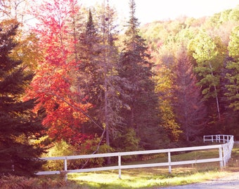 SALE, Canvas art, autumn art, wall art canvas, fall photography, extra large wall art, fall prints, autumn wall art, Vermont, New England